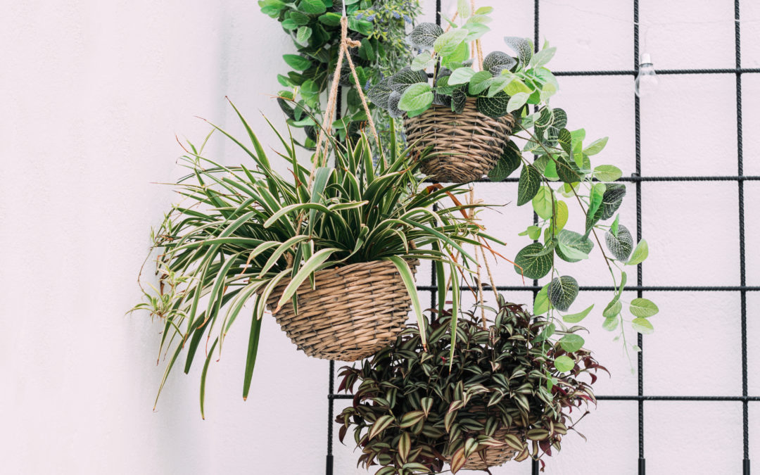 Indoor Air and Plants That Help Purify It